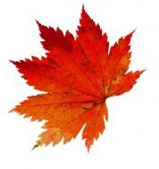 autumn-1608537_640